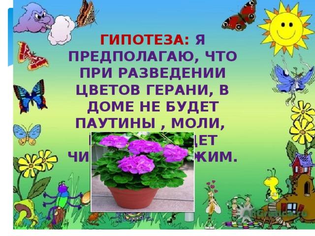 Гипотеза:  Я предполагаю, что при разведении цветов герани, в доме не будет паутины , моли, воздух будет чистым и свежим.