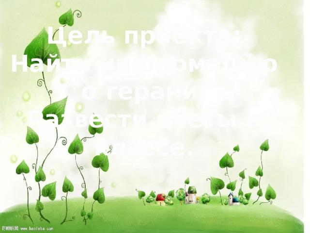 Цель проекта: Найти информацию о герани. Развести цветы в классе.