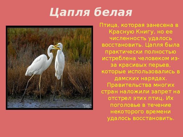 птицы нижегородской области занесенные в красную книгу вот