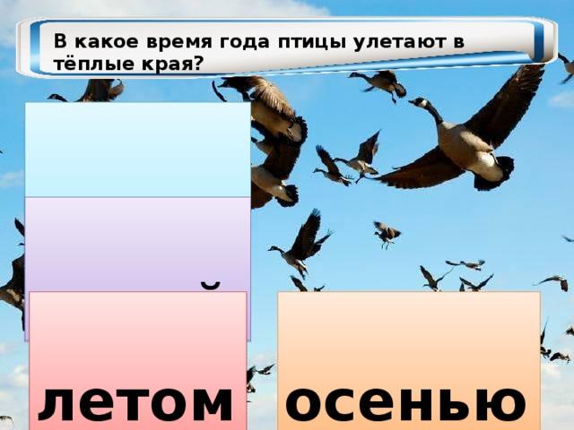 В какое время года птицы улетают в тёплые края?  весной  зимой  осенью  летом