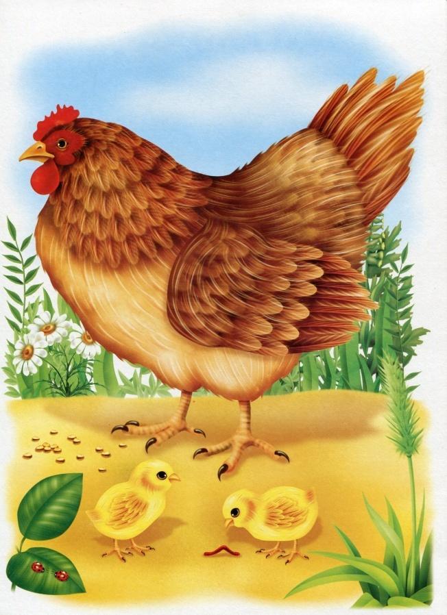 Картинка курочка и цыплятки