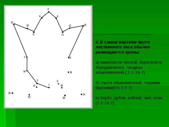 4. В самом верхнем ярусе лиственного леса обычно размещаются кроны: а) жимолости лесной, бересклета бородавчатого, лещины обыкновенной ( 2-1-14-7) б) сныти обыкновенной, черники, брусники(14-1-2-7) в) берёз, дубов, клёнов, лип, осин (1-2-14-7)