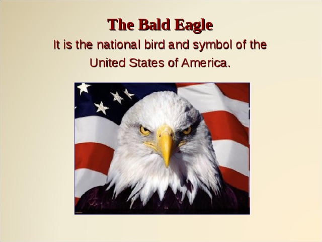 The Bald Eagle It is the national bird and symbol of the United States of America.