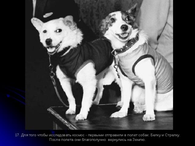 17. Для того чтобы исследовать космос - первыми отправили в полет собак: Белку и Стрелку. После полета они благополучно вернулись на Землю.