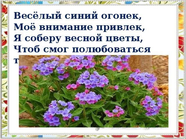 Весёлый синий огонек,  Моё внимание привлек,  Я соберу весной цветы,  Чтоб смог полюбоваться ты.