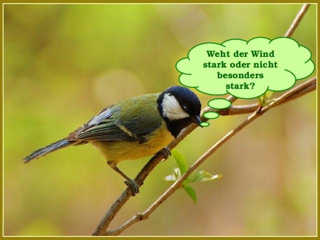 Weht der Wind stark oder nicht besonders stark?
