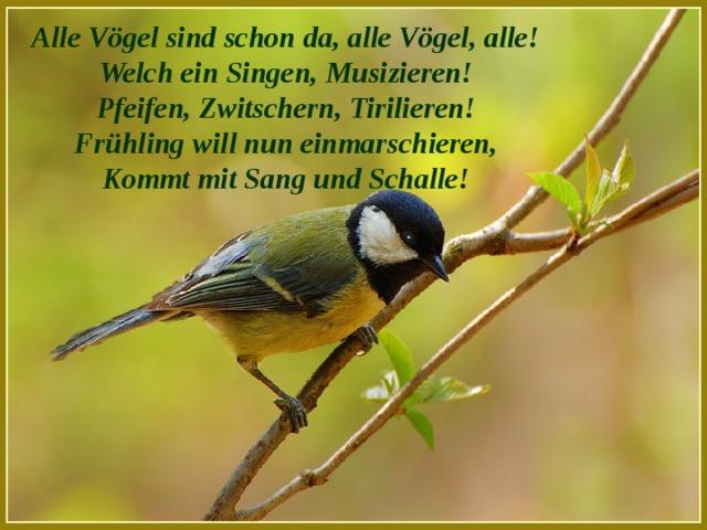 Alle Vögel sind schon da, alle Vögel, alle! Welch ein Singen, Musizieren! Pfeifen, Zwitschern, Tirilieren! Frühling will nun einmarschieren, Kommt mit Sang und Schalle!