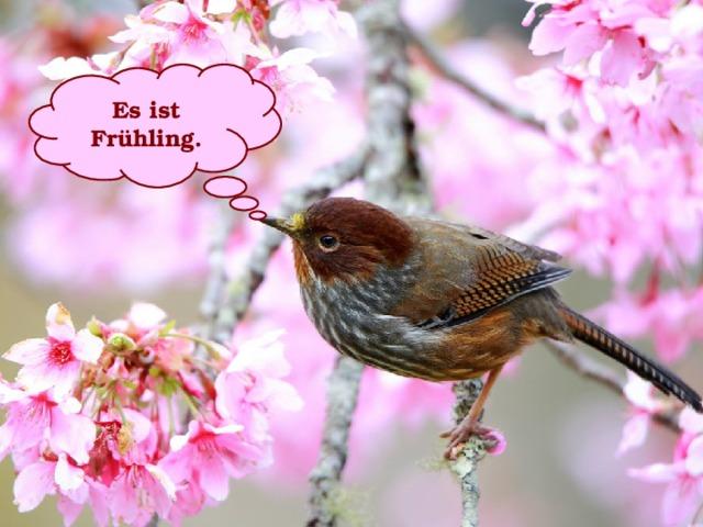 Es ist Frühling.