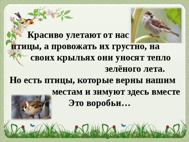 Красиво улетают от нас  птицы, а провожать их грустно, на  своих крыльях они уносят тепло        зелёного лета.  Но есть птицы, которые верны нашим   местам и зимуют здесь вместе с нами.   Это воробьи…