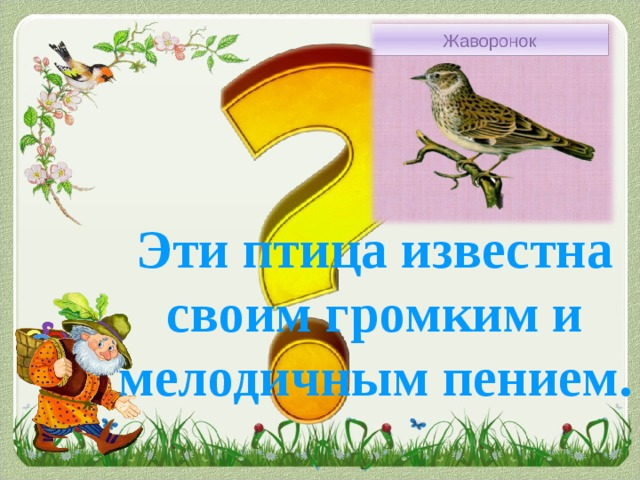 Эти птица известна своим громким и мелодичным пением.