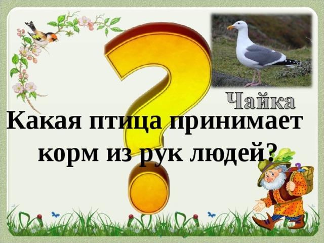 Какая птица принимает  корм из рук людей?