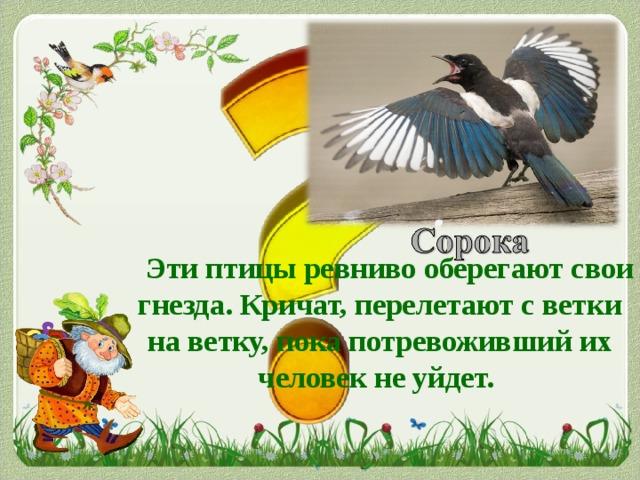 Эти птицы ревниво оберегают свои гнезда. Кричат, перелетают с ветки на ветку, пока потревоживший их человек не уйдет.