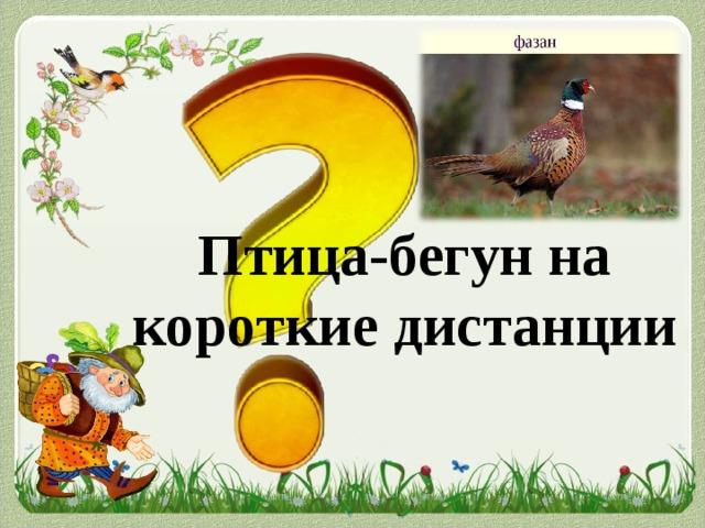 Птица-бегун на короткие дистанции