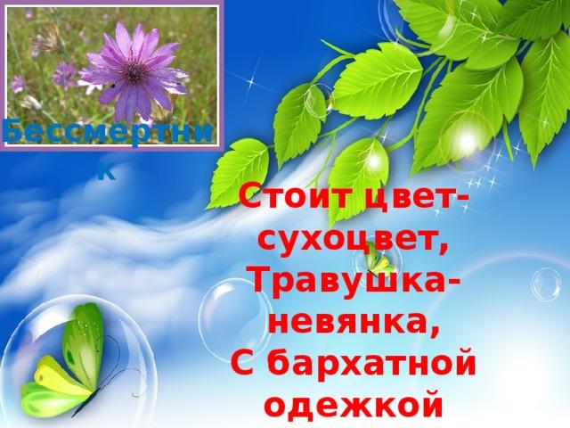 Бессмертник Стоит цвет-сухоцвет,  Травушка-невянка,  С бархатной одежкой  И с кошачьей ножкой.