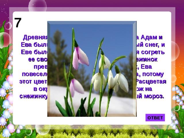 7 Древняя легенда рассказывает: когда Адам и Ева были изгнаны из рая, шел сильный снег, и Еве было очень холодно. Тогда, желая согреть ее своим вниманием, несколько снежинок превратилось в цветы. Увидев их, Ева повеселела, у нее появилась надежда, потому этот цветок стал символом надежды. Расцветая в окружении снегов, он и сам похож на снежинку и выдерживает 10- градусный мороз. ОТВЕТ