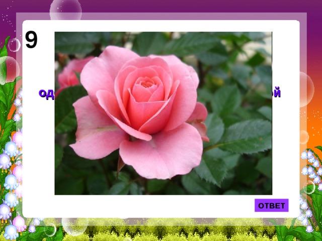 9 Лепесток какого цветка служил одеялом Дюймовочке из одноименной сказки Г. Х. Андерсена? ОТВЕТ