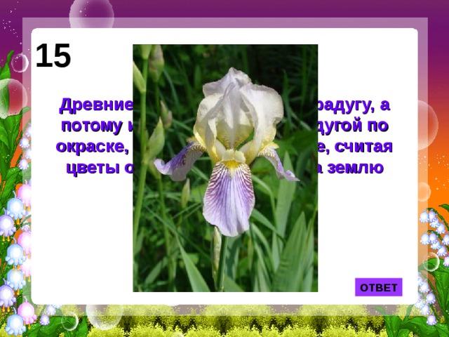 15 Древние греки называли так радугу, а потому и цветок, схожий с радугой по окраске, стали называть также, считая цветы осколками упавшей на землю радуги. ОТВЕТ