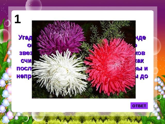 1 Угадайте, что это за цветок? По легенде он вырос из пылинки, упавшей со звезды. Это растение у древних греков считалось амулетом. Его цветки — как последняя улыбка осени. Они красивы и неприхотливы —выдерживая морозы до семи градусов. ОТВЕТ