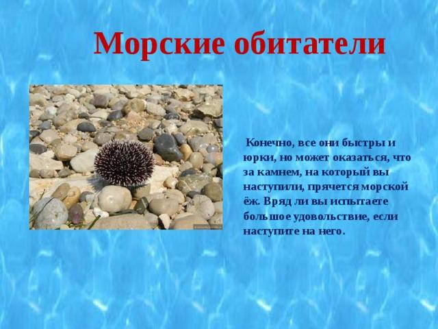 Морские обитатели   Конечно, все они быстры и юрки, но может оказаться, что за камнем, на который вы наступили, прячется морской ёж. Вряд ли вы испытаете большое удовольствие, если наступите на него.