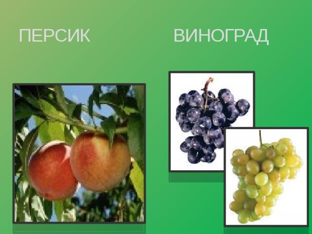 ПЕРСИК ВИНОГРАД