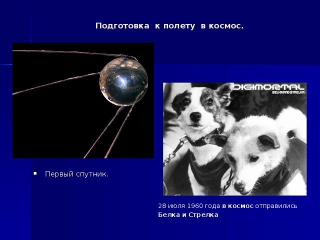Подготовка к полету в космос. Первый спутник . 28 июля 1960 года в  космос отправились Белка  и  Стрелка