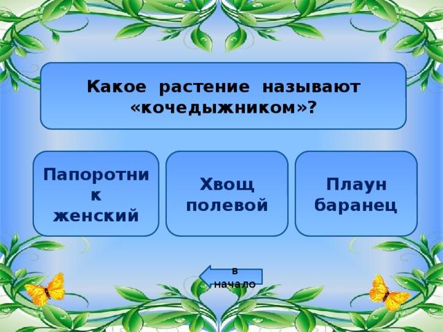 Какое растение называют «кочедыжником»? Папоротник Хвощ Плаун женский полевой баранец в начало