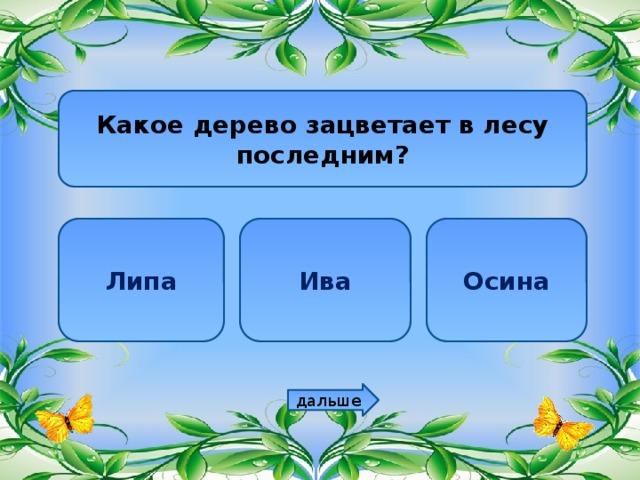 Какое дерево зацветает в лесу последним? Липа Ива Осина дальше