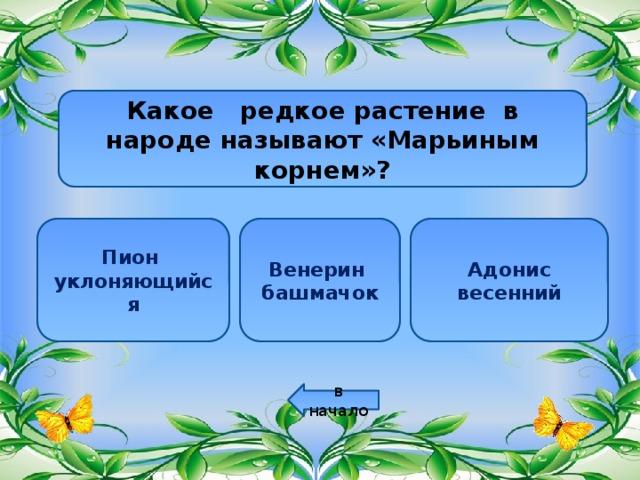 Какое редкое растение в народе называют «Марьиным корнем»? Пион Венерин Адонис уклоняющийся башмачок весенний в начало