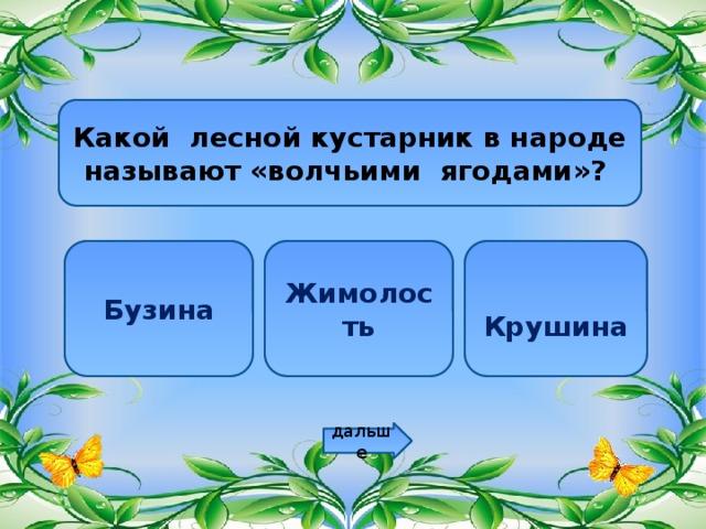 Какой лесной кустарник в народе называют «волчьими ягодами»? Бузина Жимолость   Крушина дальше