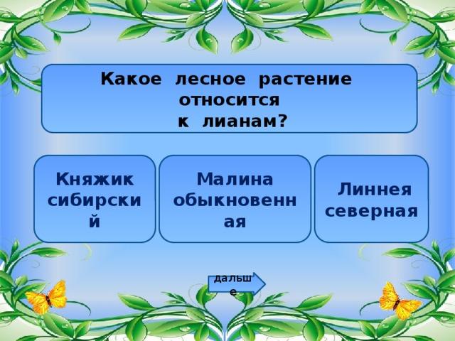 Какое лесное растение относится  к лианам? Княжик сибирский Малина обыкновенная  Линнея северная дальше
