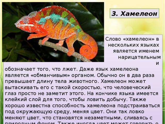 3. Хамелеон Слово «хамелеон» в нескольких языках является именем нарицательным  и обозначает того, что лжет. Даже язык хамелеона является «обманчивым» органом. Обычно он в два раза превышает длину тела животного. Хамелеон может вытаскивать его с такой скоростью, что человеческий глаз просто не заметит этого. На кончике языка имеется клейкий слой для того, чтобы ловить добычу. Также хорошо известна способность хамелеона подстраиваться под окружающую среду, меняя цвет. Они так ловко меняют цвет, что становятся незаметными, сливаясь с природным фоном. Также иногда цвет может говорить о настроении хамелеона: когда он злится, то становится красным.