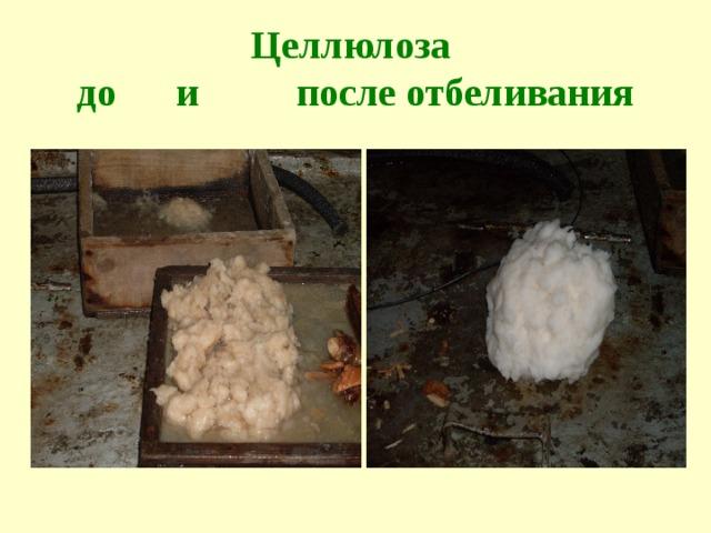 Целлюлоза  до и после отбеливания