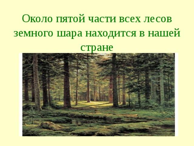 Около пятой части всех лесов земного шара находится в нашей стране