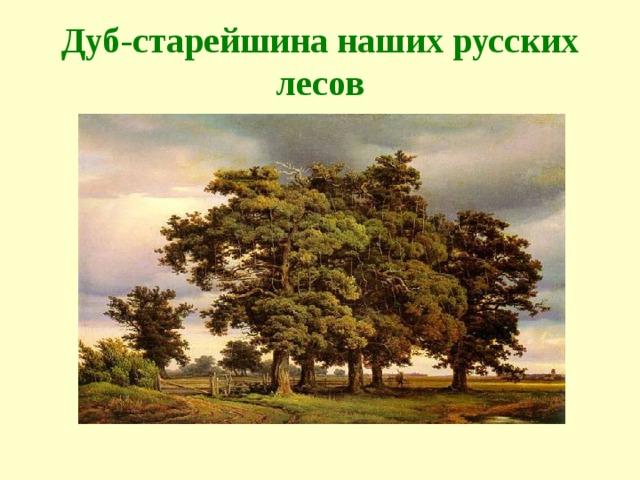 Дуб-старейшина наших русских лесов