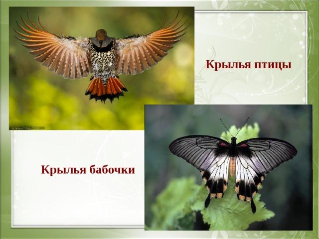 Крылья птицы Крылья бабочки