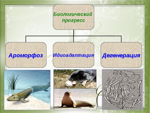 Биологический прогресс Ароморфоз Идиоадаптация Дегенерация
