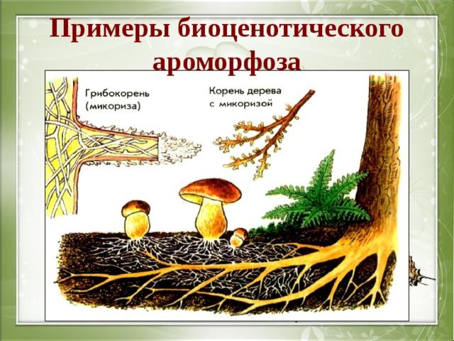Примеры биоценотического ароморфоза