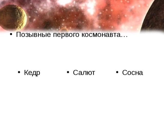 Кедр Салют Сосна