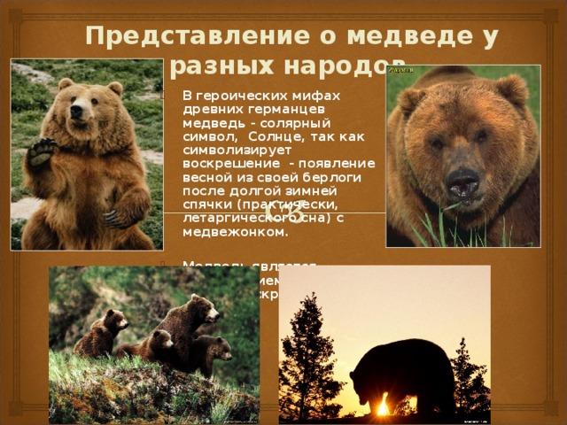 Представление о медведе у разных народов