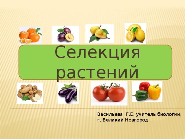 Селекция растений Васильева Г.Е. учитель биологии, г. Великий Новгород