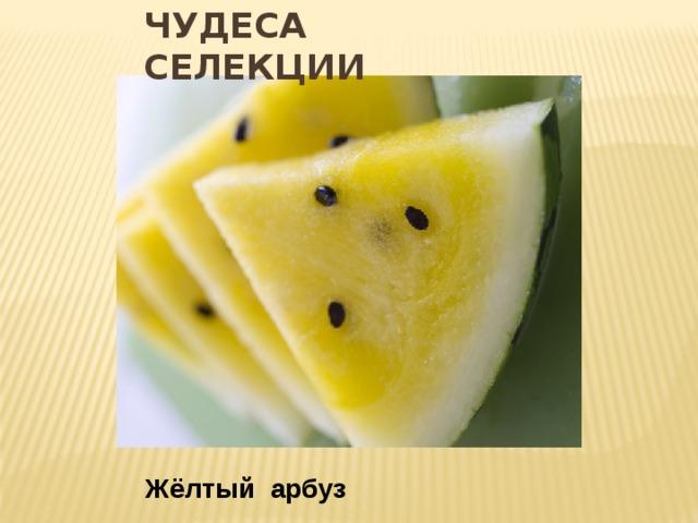 Чудеса селекции Жёлтый арбуз