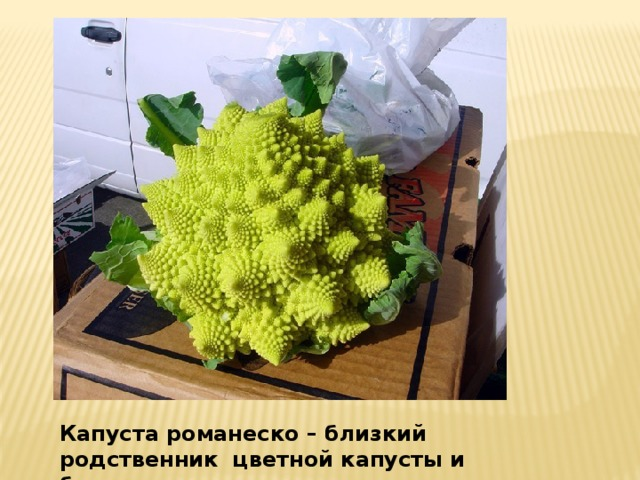Капуста романеско. Капуста романеско – близкий родственник цветной капусты и брокколи