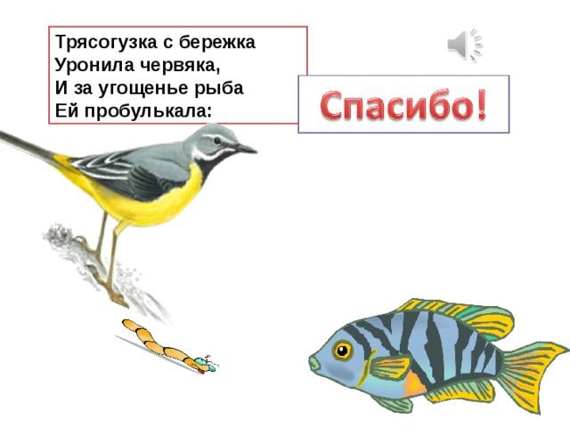 Трясогузка с бережка  Уронила червяка,  И за угощенье рыба  Ей пробулькала: