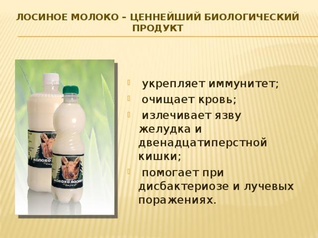 Лосиное молоко – ценнейший биологический продукт