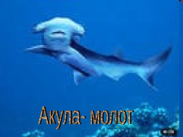 Акула- молот