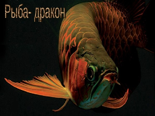 Рыба- дракон