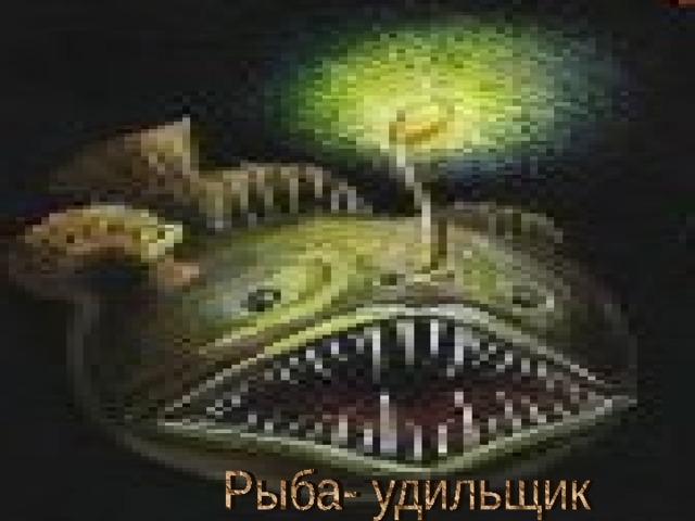 Рыба- удильщик