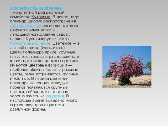 Олеандр обыкновенный - монотипный род растений семейства Кутровые . В диком виде олеандр широко распространён в субтропических регионах планеты; широко применяется в ландшафтном дизайне садов и парков. Культивируется и как комнатное растение . Цветение— в летний период (июнь-июль). Цветки олеандра яркие, крупные, пятилепестоковые, расположены в конечных щитковидных соцветиях. Имеются цветовые вариации— наиболее обычны белые и розовые цветы, реже встречаются красные и жёлтые. В период цветения олеандра на концах молодых побегов появляются крупные цветки, собранные в плотные, хорошо заметные соцветия . В настоящее время выведено много сортов олеандра с цветами различной формы.