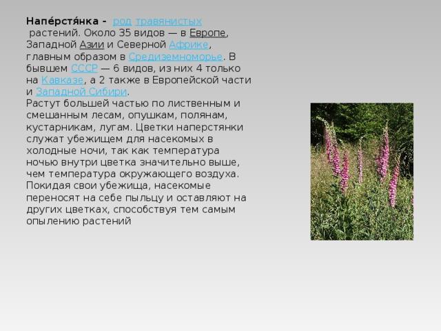 Напе́рстя́нка -  род  травянистых растений. Около 35 видов— в Европе , Западной Азии и Северной Африке , главным образом в Средиземноморье . В бывшем СССР — 6 видов, из них 4 только на Кавказе , а 2 также в Европейской части и Западной Сибири . Растут большей частью по лиственным и смешанным лесам, опушкам, полянам, кустарникам, лугам. Цветки наперстянки служат убежищем для насекомых в холодные ночи, так как температура ночью внутри цветка значительно выше, чем температура окружающего воздуха. Покидая свои убежища, насекомые переносят на себе пыльцу и оставляют на других цветках, способствуя тем самым опылению растений