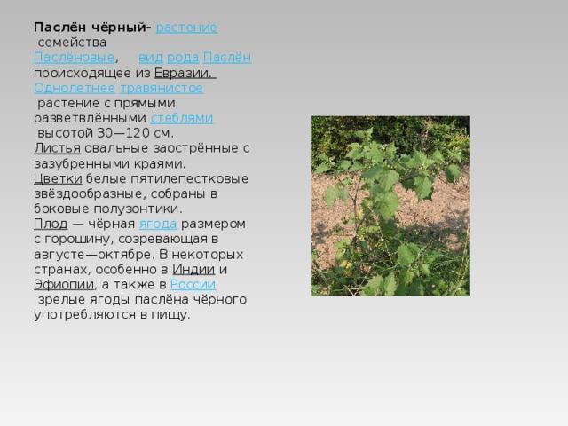 Паслён чёрный- растение семейства Паслёновые , вид  рода  Паслён происходящее из Евразии . Однолетнее  травянистое растение с прямыми разветвлёнными стеблями высотой 30—120см. Листья овальные заострённые с зазубренными краями. Цветки белые пятилепестковые звёздообразные, собраны в боковые полузонтики. Плод — чёрная ягода размером с горошину, созревающая в августе—октябре. В некоторых странах, особенно в Индии и Эфиопии , а также в России зрелые ягоды паслёна чёрного употребляются в пищу.